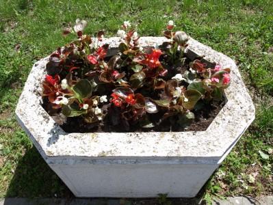 Посађено цвеће у Шимановцима